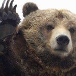 tác động của thị trường gấu đối với nhà đầu tư