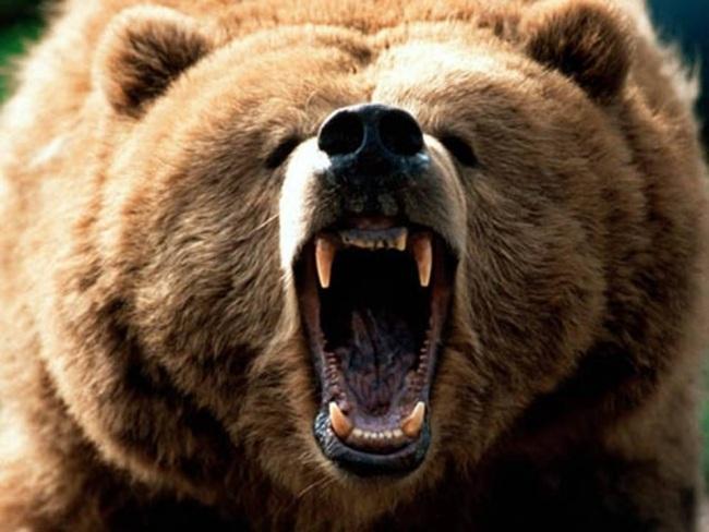 Thị Trường Gấu Mới Vừa Bắt đầu Phải Không